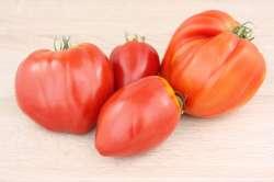 Tomates Coeur de Boeuf Bio