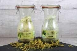 Sucres aux plantes