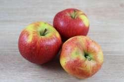 Pomme Reinette Bio