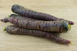 Carottes violette Bio