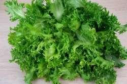 Salade Frisée Bio